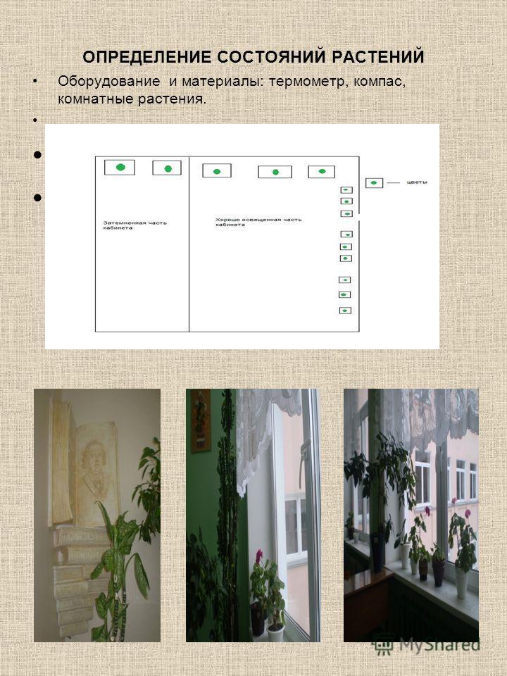 ОПРЕДЕЛЕНИЕ СОСТОЯНИЙ РАСТЕНИЙ Оборудование и материалы: термометр, компас, комнатные растения.