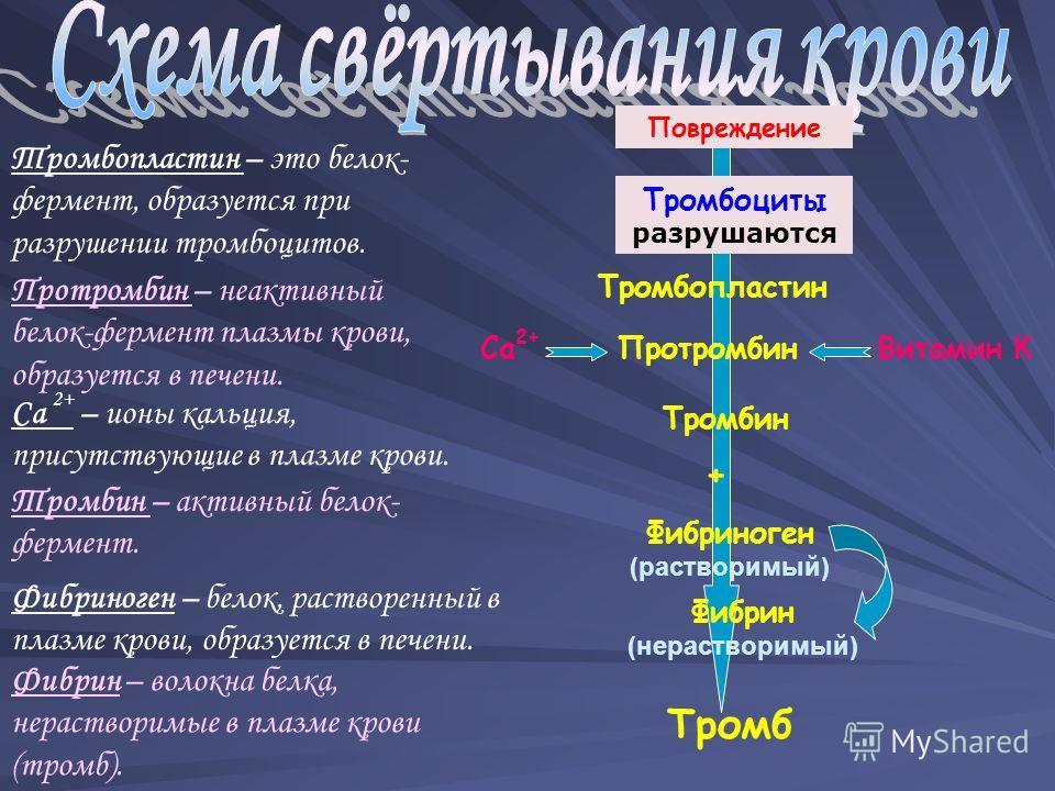 Тромбопластин ПротромбинВитамин К Повреждение Тромбоциты разрушаются Са 2+ Фибриноген (растворимый) Фибрин (нерастворимый) Тромб Тромбопластин – это белок- фермент, образуется при разрушении тромбоцитов. Протромбин – неактивный белок-фермент плазмы к