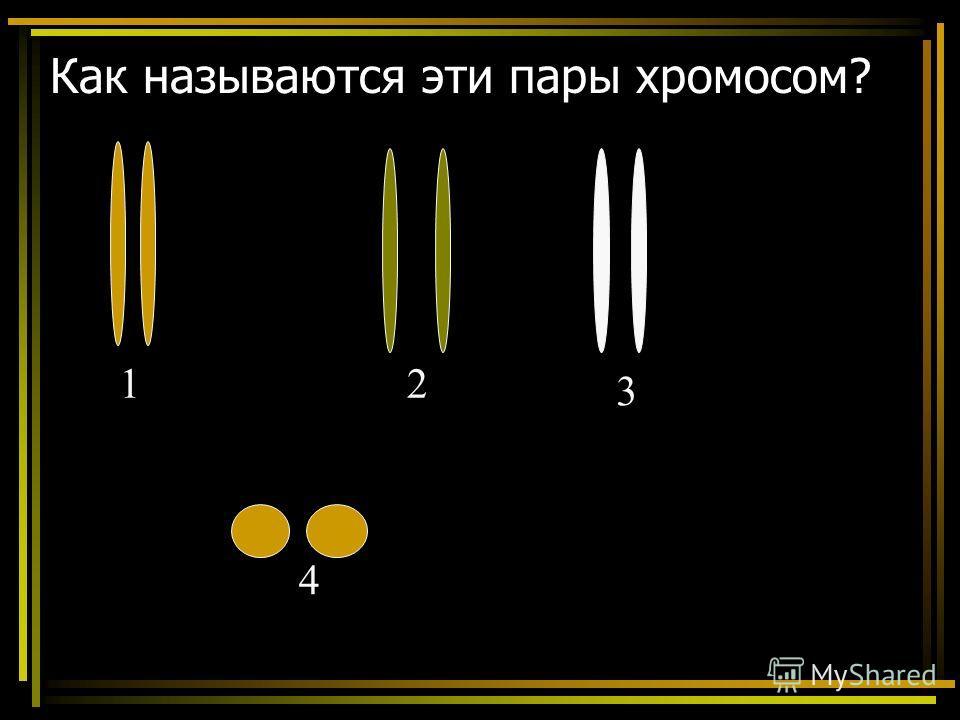 Как называются эти пары хромосом? 12 3 4