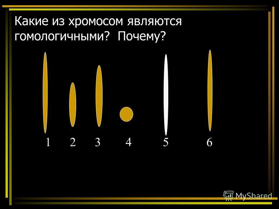 Какие из хромосом являются гомологичными? Почему? 1 2 3 4 5 6