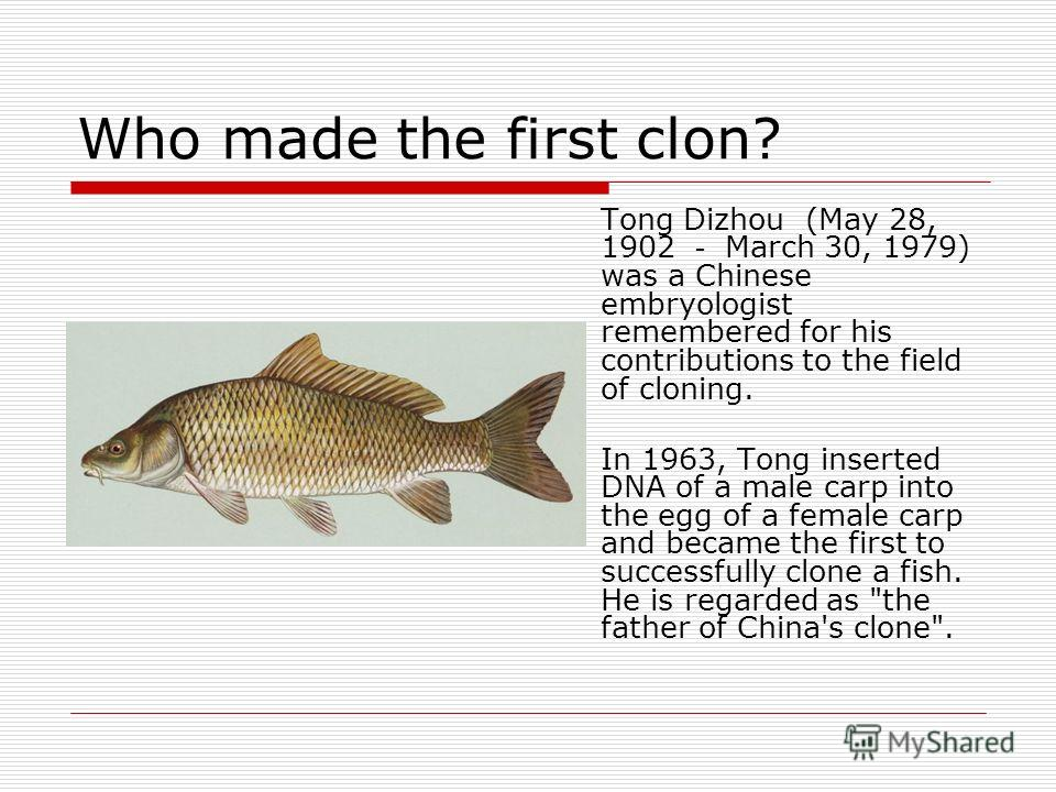 Who made the first clon? Tong Dizhou (May 28, 1902 March 30, 1979) was a Chinese embryologist remembered for his contributions to the field of cloning. In 1963, Tong inserted DNA of a male carp into the egg of a female carp and became the first to su