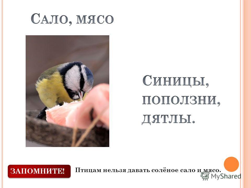 ЗАПОМНИТЕ! Птицам нельзя давать солёное сало и мясо.