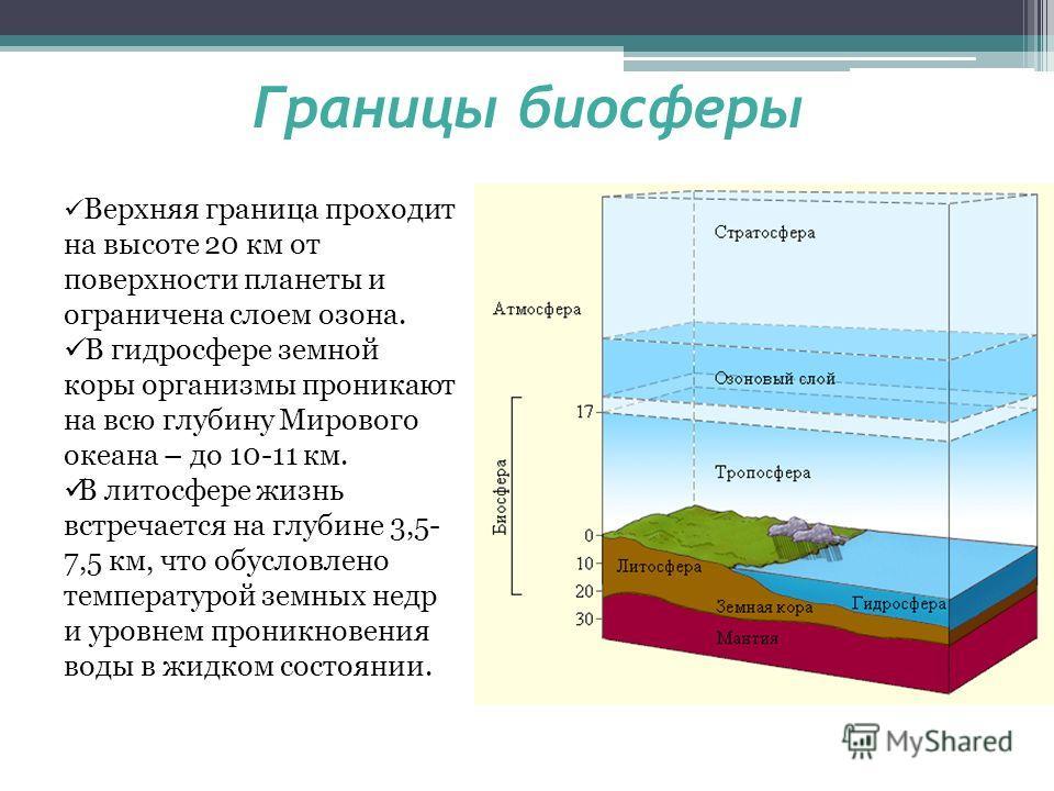 Границы биосферы Верхняя граница проходит на высоте 20 км от поверхности планеты и ограничена слоем озона. В гидросфере земной коры организмы проникают на всю глубину Мирового океана – до 10-11 км. В литосфере жизнь встречается на глубине 3,5- 7,5 км