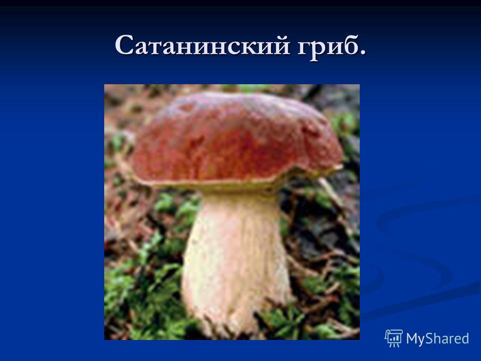 Сатанинский гриб.