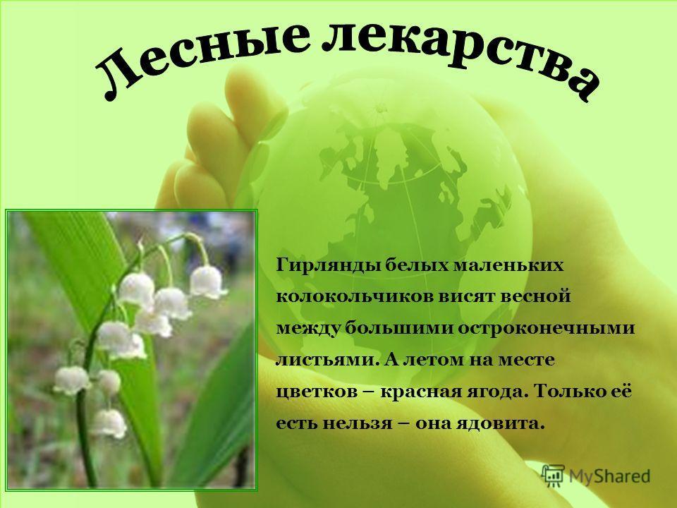 Гирлянды белых маленьких колокольчиков висят весной между большими остроконечными листьями. А летом на месте цветков – красная ягода. Только её есть нельзя – она ядовита.
