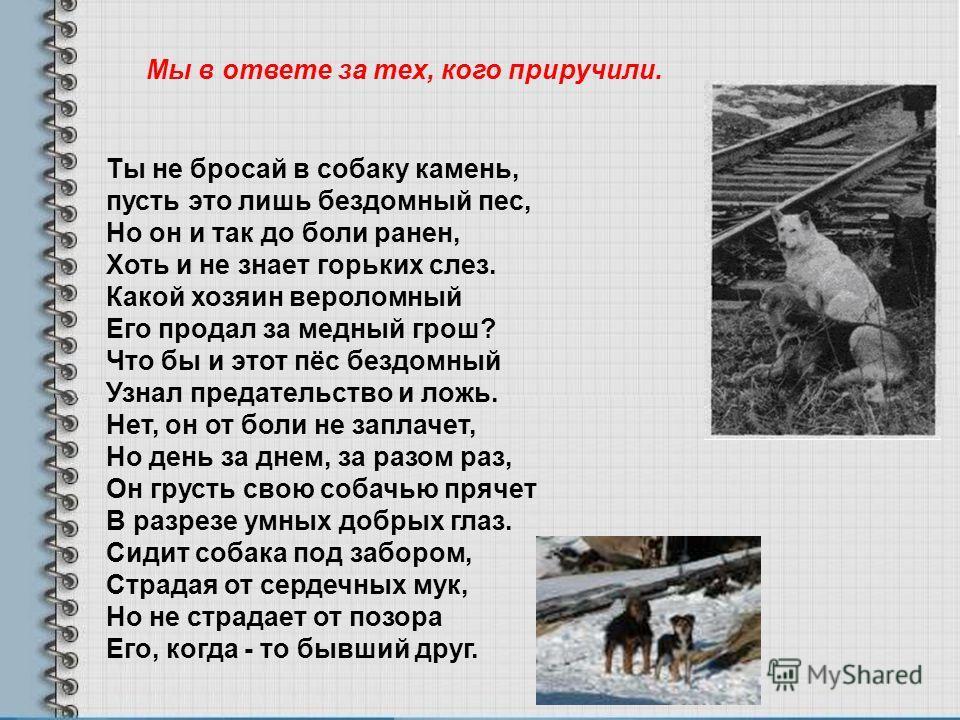 Ты не бросай в собаку камень, пусть это лишь бездомный пес, Но он и так до боли ранен, Хоть и не знает горьких слез. Какой хозяин вероломный Его продал за медный грош? Что бы и этот пёс бездомный Узнал предательство и ложь. Нет, он от боли не заплаче