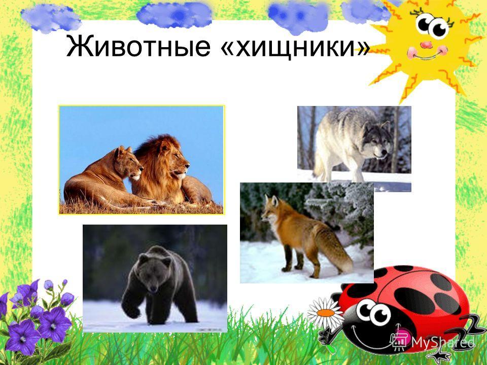 Животные «хищники»