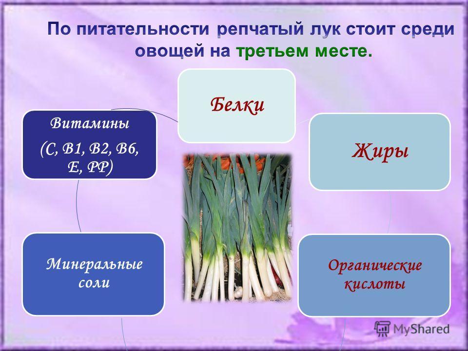 Белки Жиры Органические кислоты Минеральные соли Витамины (С, В1, В2, В6, Е, РР)
