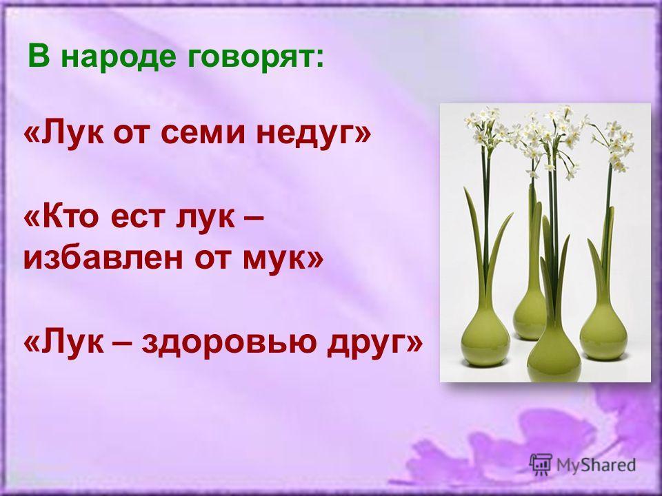 В народе говорят: «Лук от семи недуг» «Кто ест лук – избавлен от мук» «Лук – здоровью друг»