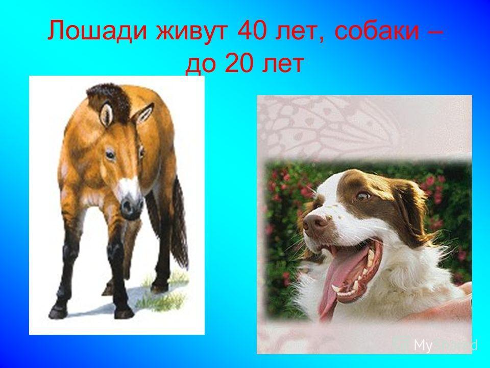 Лошади живут 40 лет, собаки – до 20 лет