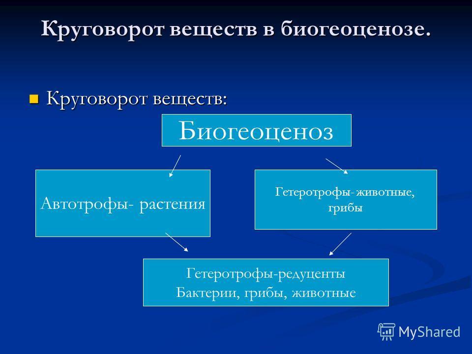 Круговорот веществ в биогеоценозе. Круговорот веществ: Круговорот веществ: Автотрофы- растения Биогеоценоз Гетеротрофы- животные, грибы Гетеротрофы-редуценты Бактерии, грибы, животные