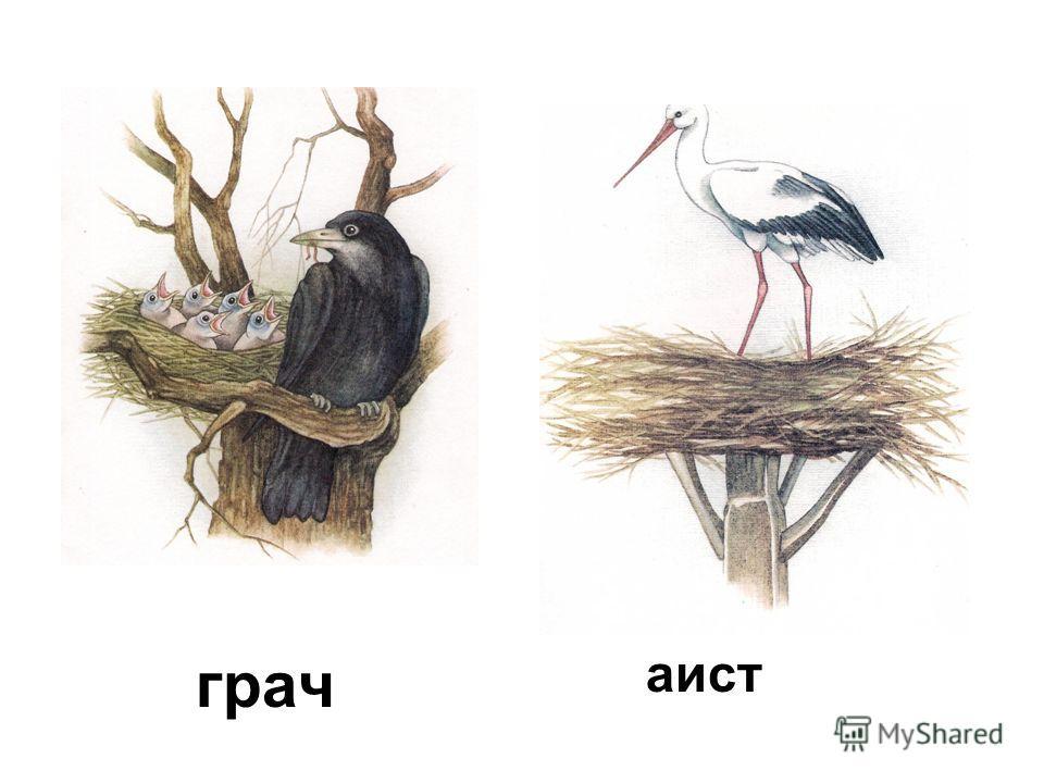Назовите птиц. ласточка скворец