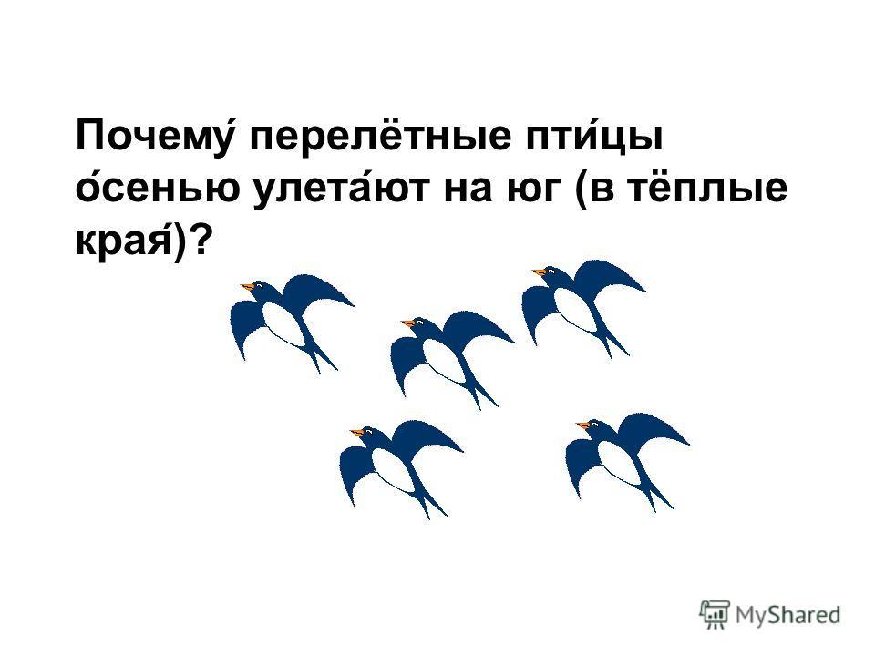 Какие это птицы? Это перелётные птицы. Почему они так называются? Потому что они осенью улетают на юг, а весной возвращаются.