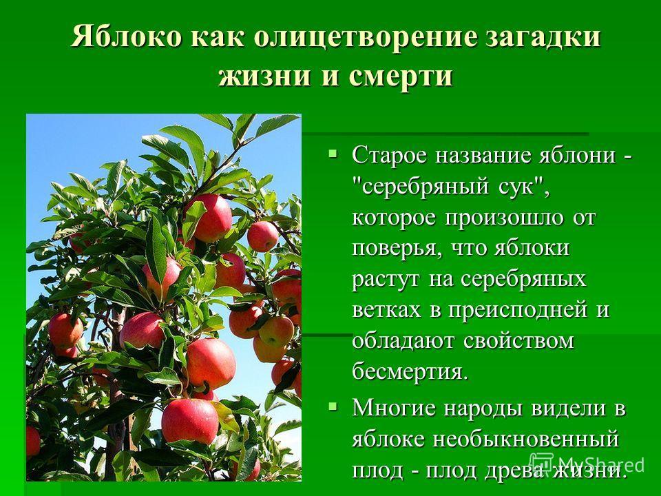Яблоко как олицетворение загадки жизни и смерти Старое название яблони -