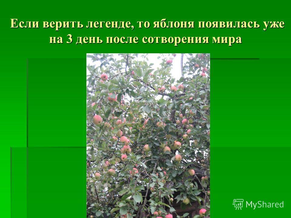Если верить легенде, то яблоня появилась уже на 3 день после сотворения мира Если верить легенде, то яблоня появилась уже на 3 день после сотворения мира