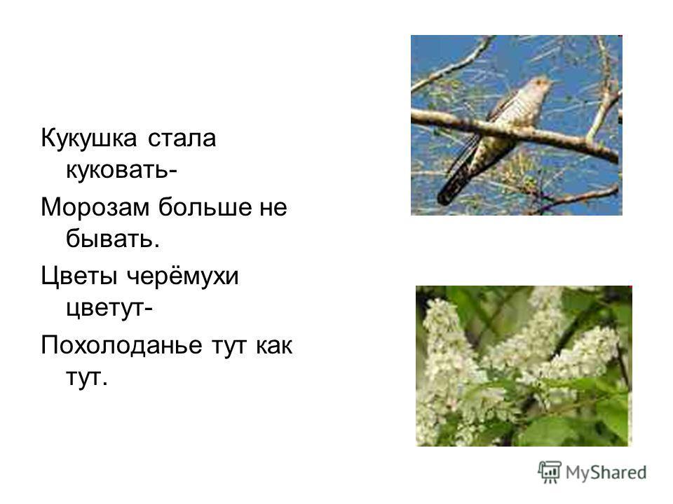 Кукушка стала куковать- Морозам больше не бывать. Цветы черёмухи цветут- Похолоданье тут как тут.