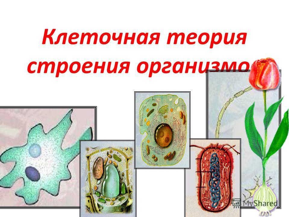 Клеточная теория строения организмов