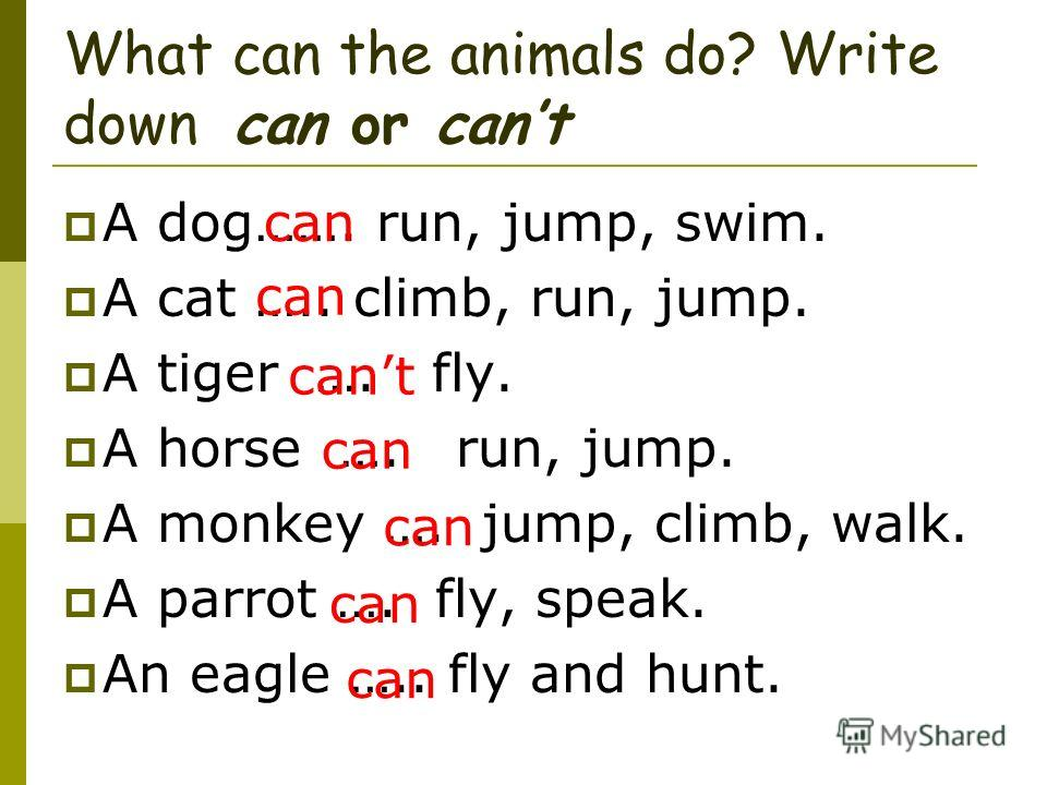 What can the animals do? Write down can or cant A dog……. run, jump, swim. A cat ….. climb, run, jump. A tiger …. fly. A horse …. run, jump. A monkey …. jump, climb, walk. A parrot …. fly, speak. An eagle ….. fly and hunt. can cant can