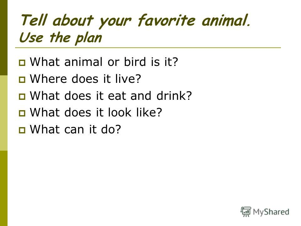 Tell about your favorite animal. Use the plan What animal or bird is it? Where does it live? What does it eat and drink? What does it look like? What can it do?