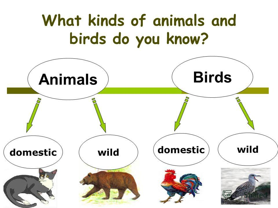 What kinds of animals and birds do you know? Animals Birds domestic wild domestic wild