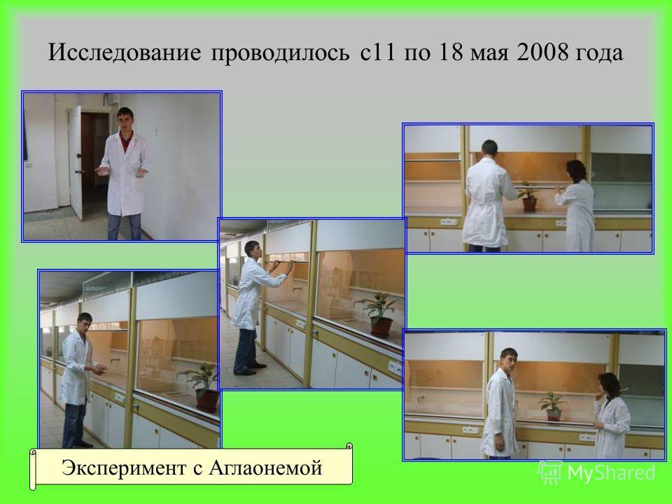 Исследование проводилось с11 по 18 мая 2008 года Эксперимент с Аглаонемой
