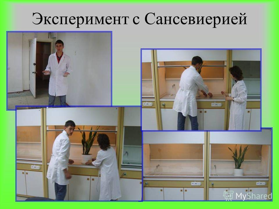Эксперимент с Сансевиерией