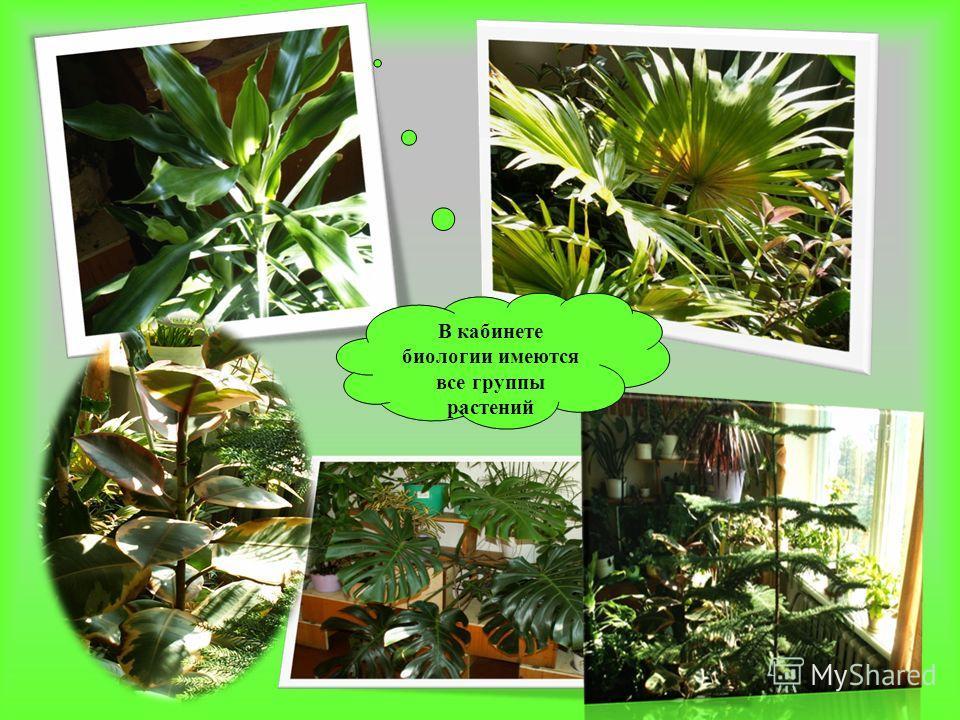 В кабинете биологии имеются все группы растений