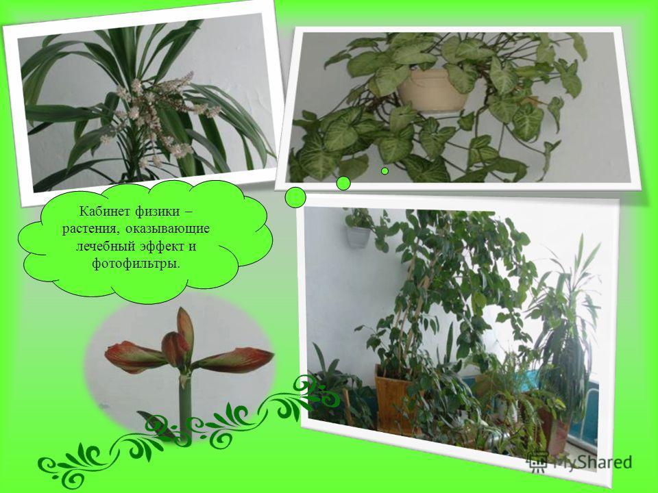 Кабинет физики – растения, оказывающие лечебный эффект и фотофильтры.