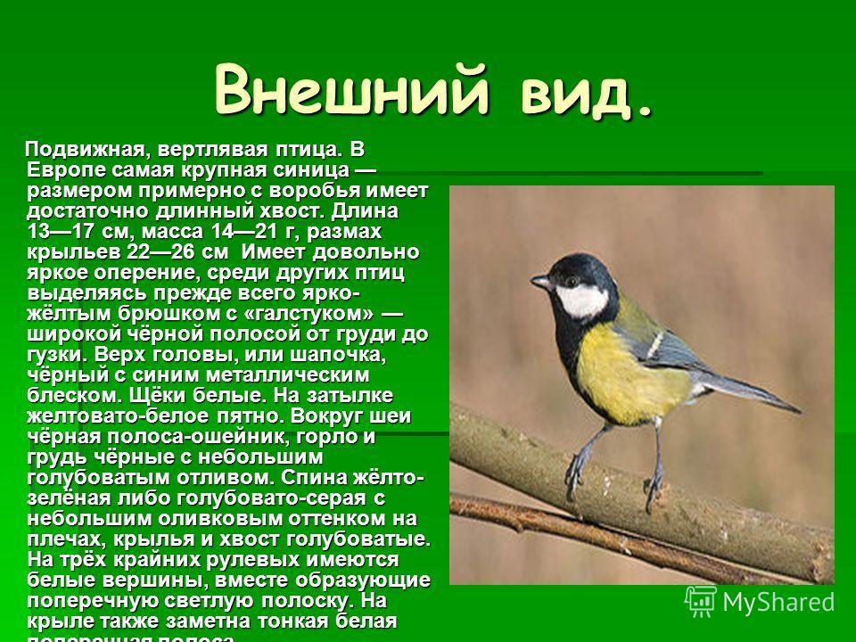 Внешний вид. Подвижная, вертлявая птица. В Европе самая крупная синица размером примерно с воробья имеет достаточно длинный хвост. Длина 1317 см, масса 1421 г, размах крыльев 2226 см Имеет довольно яркое оперение, среди других птиц выделяясь прежде в