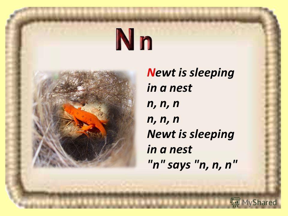 Newt is sleeping in a nest n, n, n n, n, n Newt is sleeping in a nest n says n, n, n