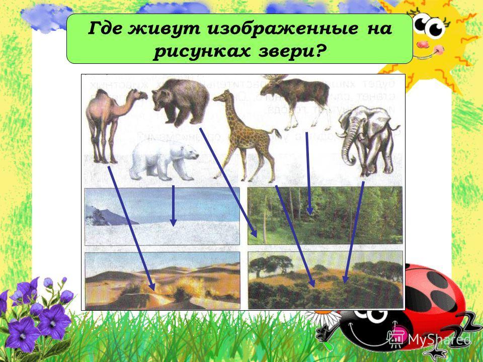 Где живут изображенные на рисунках звери?
