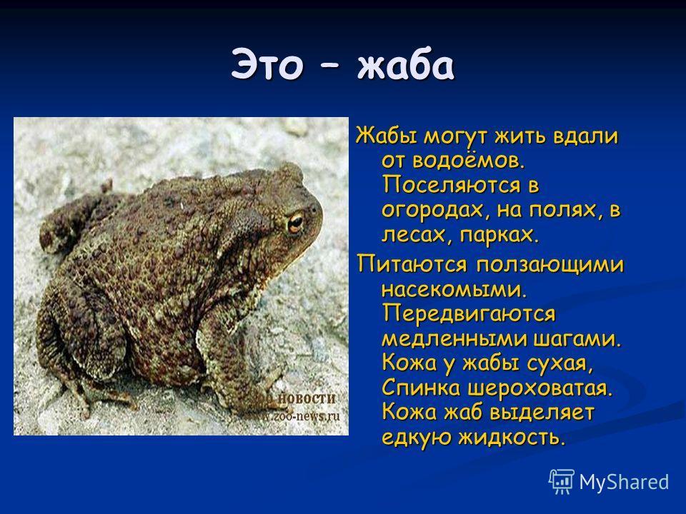 Это – жаба Жабы могут жить вдали от водоёмов. Поселяются в огородах, на полях, в лесах, парках. Питаются ползающими насекомыми. Передвигаются медленными шагами. Кожа у жабы сухая, Спинка шероховатая. Кожа жаб выделяет едкую жидкость.