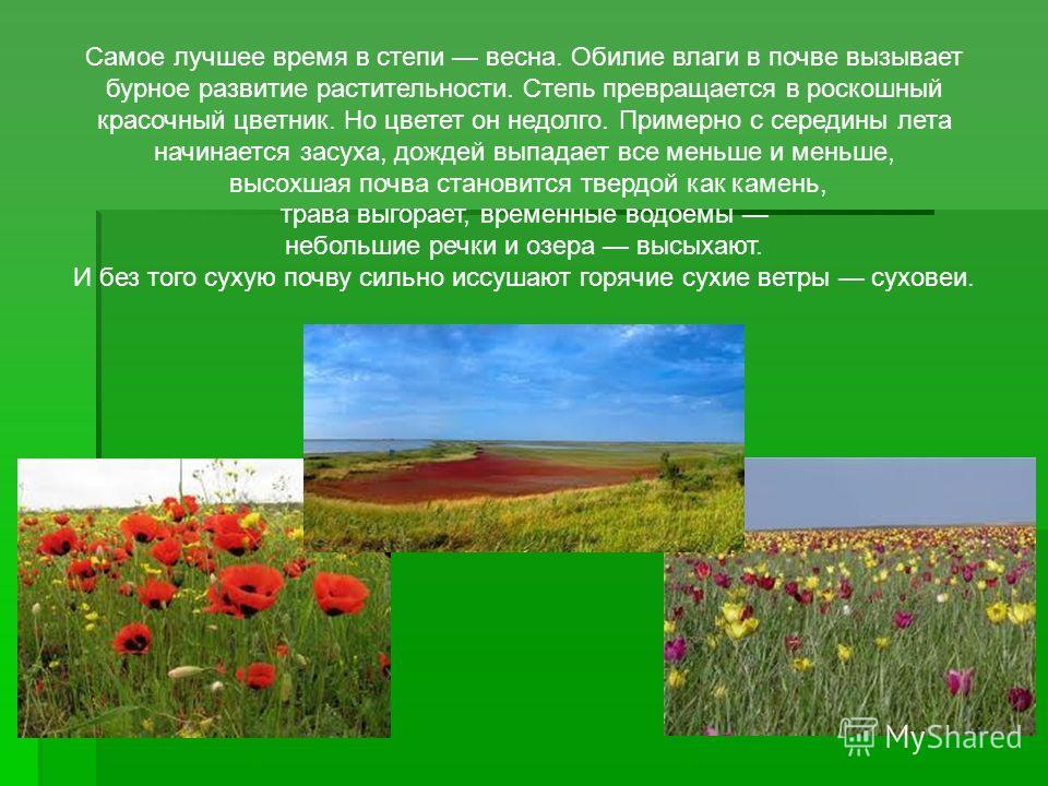 Самое лучшее время в степи весна. Обилие влаги в почве вызывает бурное развитие растительности. Степь превращается в роскошный красочный цветник. Но цветет он недолго. Примерно с середины лета начинается засуха, дождей выпадает все меньше и меньше, в