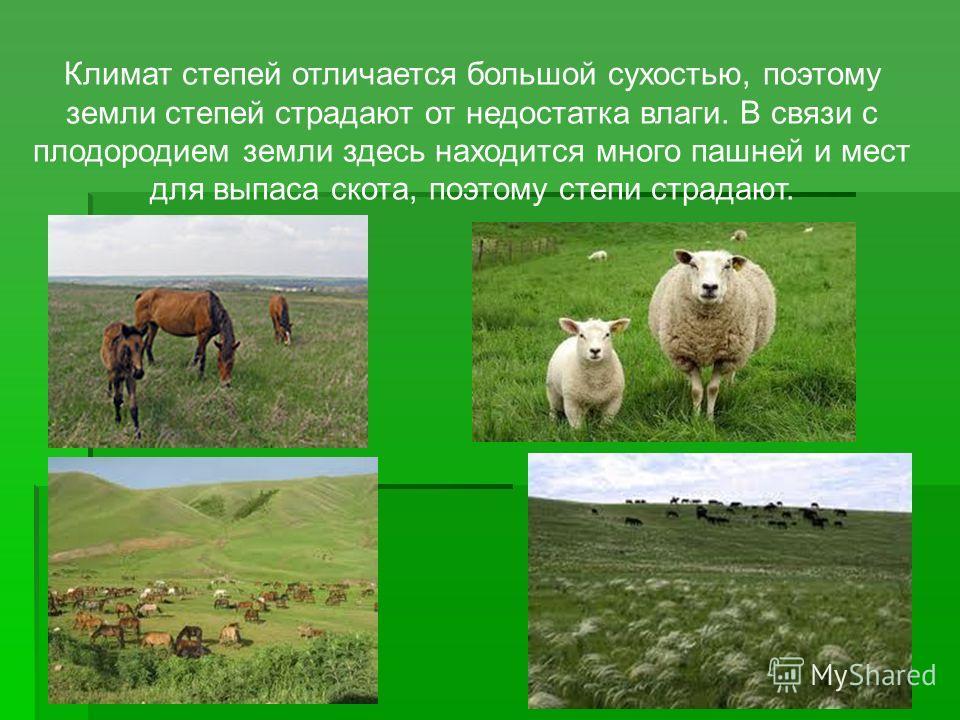 Климат степей отличается большой сухостью, поэтому земли степей страдают от недостатка влаги. В связи с плодородием земли здесь находится много пашней и мест для выпаса скота, поэтому степи страдают.