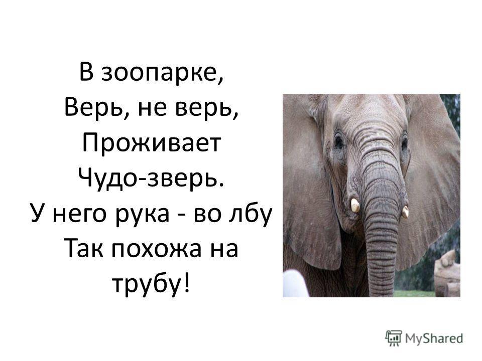 В зоопарке, Верь, не верь, Проживает Чудо-зверь. У него рука - во лбу Так похожа на трубу!
