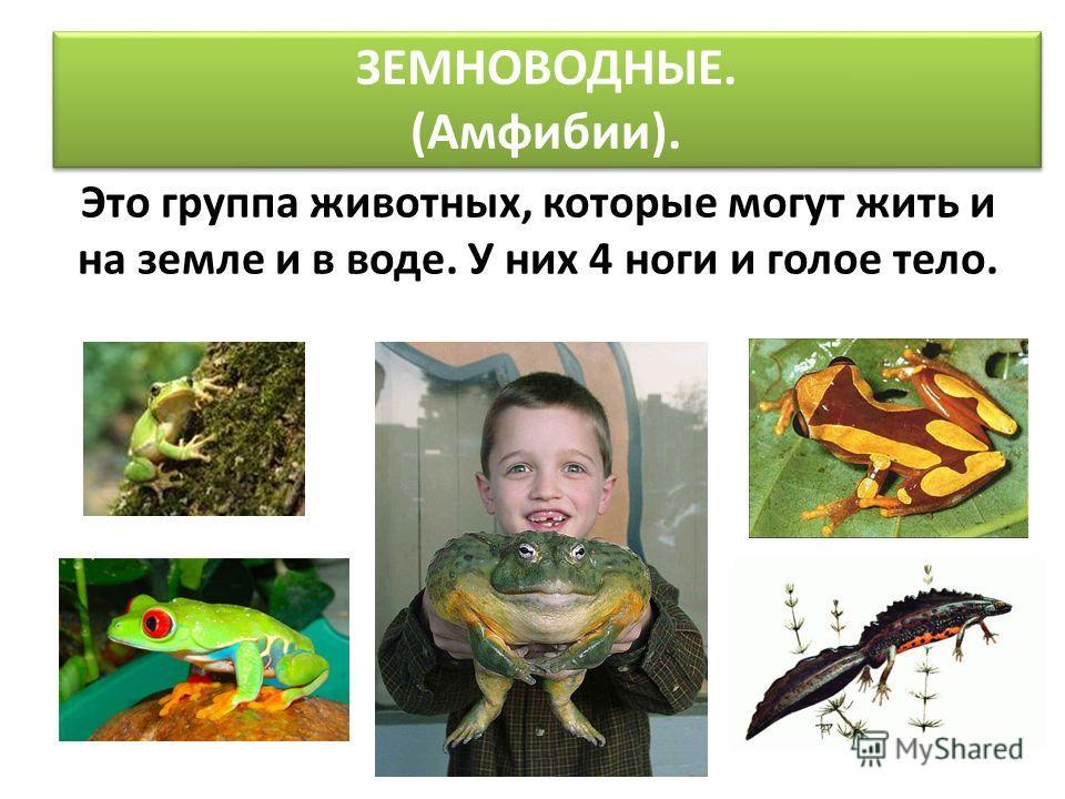 ЗЕМНОВОДНЫЕ. (Амфибии). Это группа животных, которые могут жить и на земле и в воде. У них 4 ноги и голое тело.