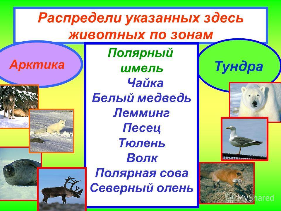 Распредели указанных здесь животных по зонам Арктика Тундра Полярный шмель Чайка Белый медведь Лемминг Песец Тюлень Волк Полярная сова Северный олень