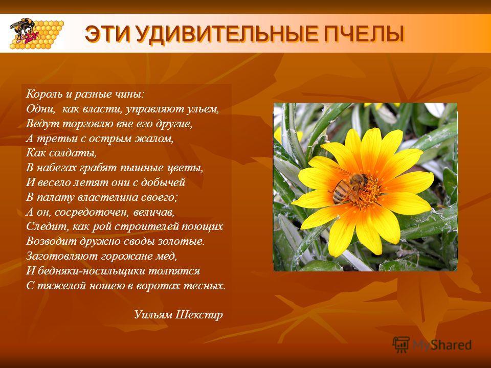 ЭТИ УДИВИТЕЛЬНЫЕ ПЧЕЛЫ Король и разные чины: Одни, как власти, управляют ульем, Ведут торговлю вне его другие, А третьи с острым жалом, Как солдаты, В набегах грабят пышные цветы, И весело летят они с добычей В палату властелина своего; А он, сосредо