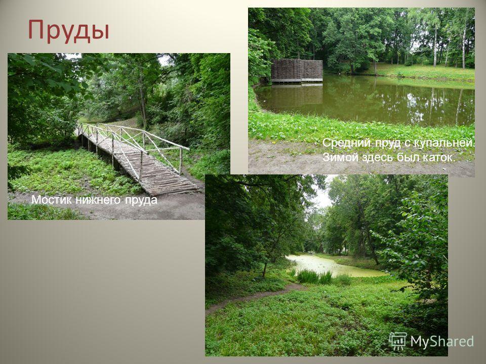 Пруды Мостик нижнего пруда Средний пруд с купальней. Зимой здесь был каток.