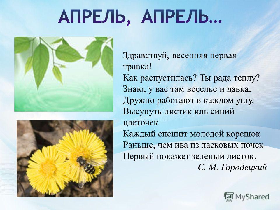 Здравствуй, весенняя первая травка! Как распустилась? Ты рада теплу? Знаю, у вас там веселье и давка, Дружно работают в каждом углу. Высунуть листик иль синий цветочек Каждый спешит молодой корешок Раньше, чем ива из ласковых почек Первый покажет зел