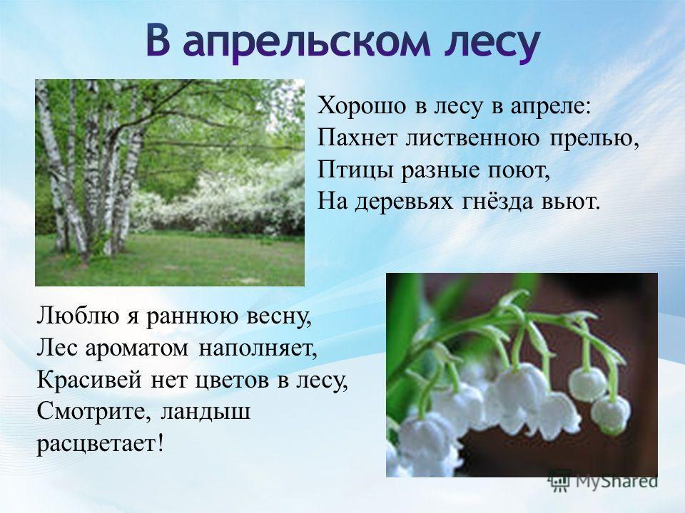 Хорошо в лесу в апреле: Пахнет лиственною прелью, Птицы разные поют, На деревьях гнёзда вьют. Люблю я раннюю весну, Лес ароматом наполняет, Красивей нет цветов в лесу, Смотрите, ландыш расцветает!