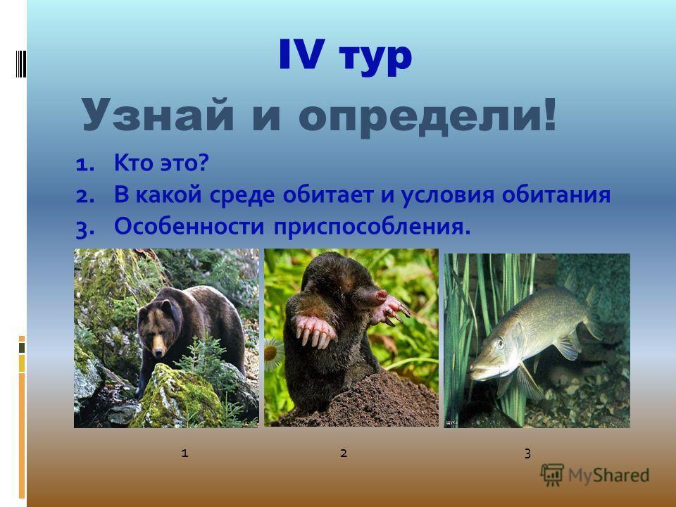IV тур Узнай и определи! 1.Кто это? 2.В какой среде обитает и условия обитания 3.Особенности приспособления. 12 3