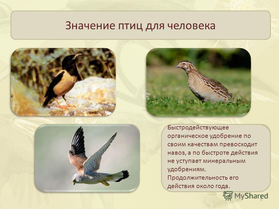 Значение птиц для человека Истребляют насекомых вредителей садов и огородов Некоторые виды птиц являются объектом промысла Птичий помёт используется в качестве органического удобрения Уничтожают мелких грызунов- вредителей и распространителей многих