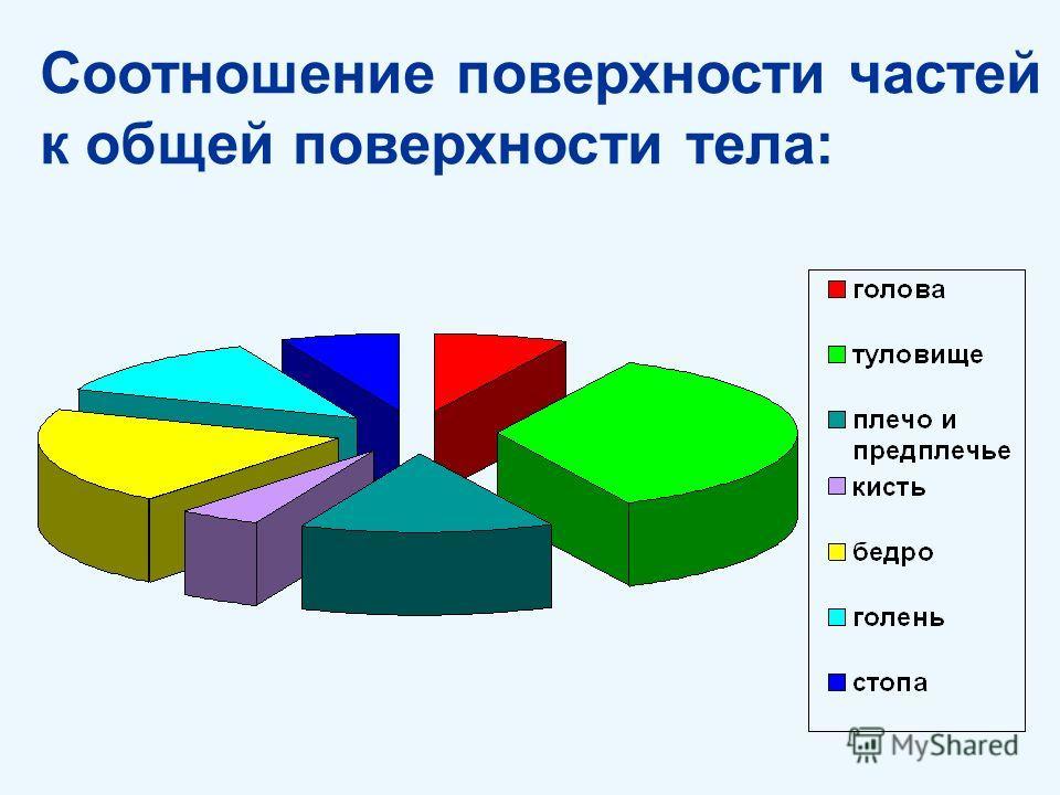 Соотношение поверхности частей к общей поверхности тела: