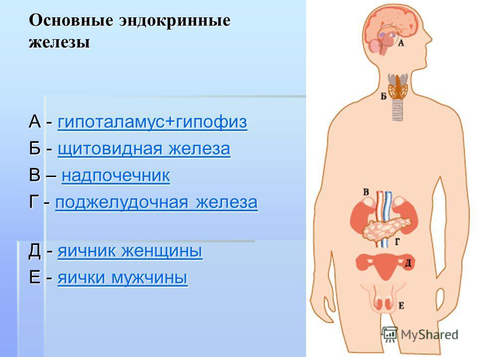 Основные эндокринные железы А - гипоталамус+гипофиз гипоталамус+гипофиз Б - щитовидная железа щитовидная железащитовидная железа В – надпочечник надпочечник Г - поджелудочная железа поджелудочная железаподжелудочная железа Д - яичник женщины яичник ж