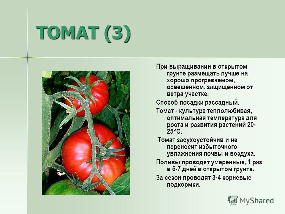 ТОМАТ (3) При выращивании в открытом грунте размещать лучше на хорошо прогреваемом, освещенном, защищенном от ветра участке. Способ посадки рассадный. Томат - культура теплолюбивая, оптимальная температура для роста и развития растений 20- 25°С. Тома