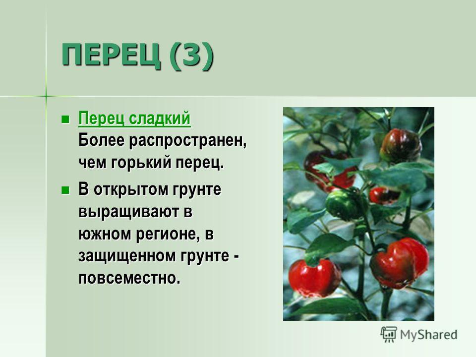 ПЕРЕЦ (3) Перец сладкий Более распространен, чем горький перец. Перец сладкий Более распространен, чем горький перец. Перец сладкий Перец сладкий В открытом грунте выращивают в южном регионе, в защищенном грунте - повсеместно. В открытом грунте выращ
