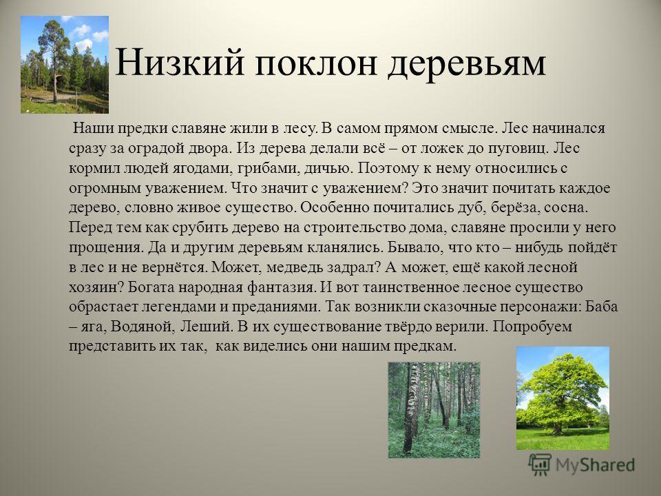 Низкий поклон деревьям Наши предки славяне жили в лесу. В самом прямом смысле. Лес начинался сразу за оградой двора. Из дерева делали всё – от ложек до пуговиц. Лес кормил людей ягодами, грибами, дичью. Поэтому к нему относились с огромным уважением.