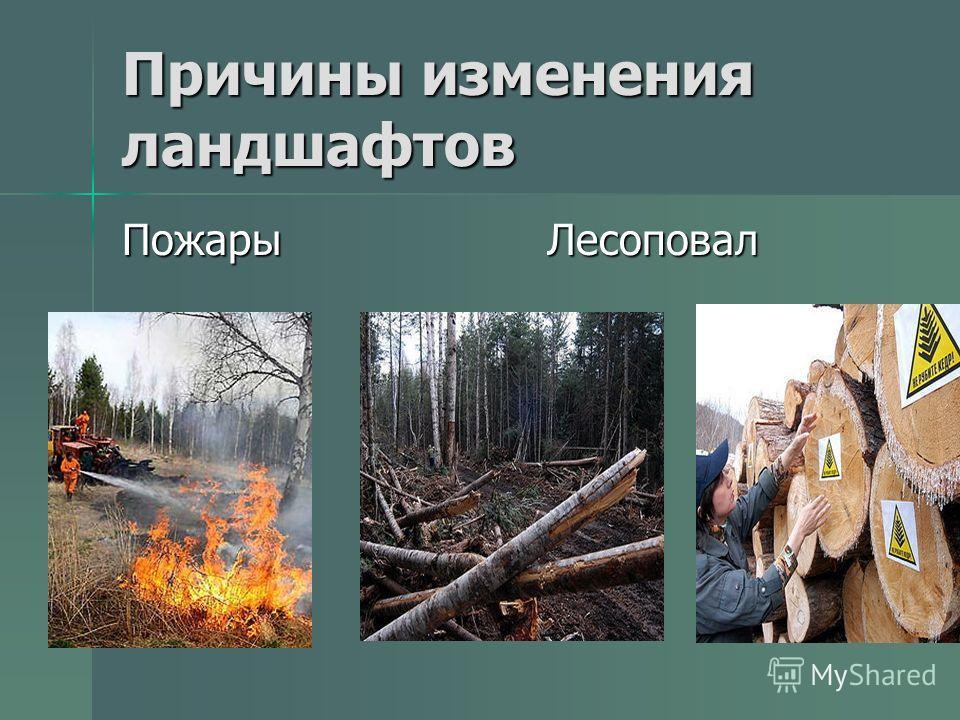 Причины изменения ландшафтов Пожары Лесоповал