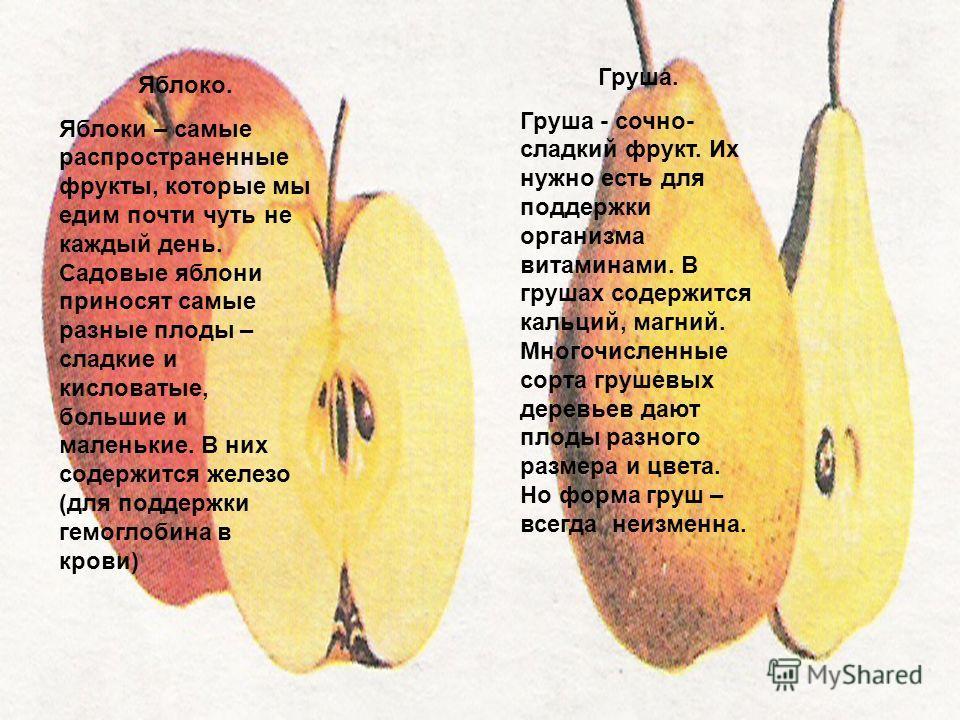 Яблоко. Яблоки – самые распространенные фрукты, которые мы едим почти чуть не каждый день. Садовые яблони приносят самые разные плоды – сладкие и кисловатые, большие и маленькие. В них содержится железо (для поддержки гемоглобина в крови) Груша. Груш